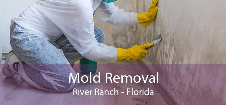 Mold Removal River Ranch - Florida