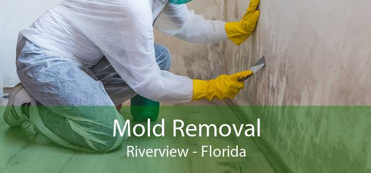 Mold Removal Riverview - Florida