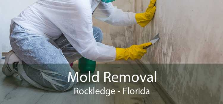 Mold Removal Rockledge - Florida