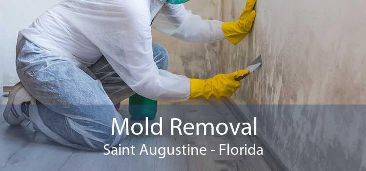 Mold Removal Saint Augustine - Florida