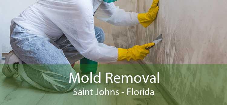 Mold Removal Saint Johns - Florida