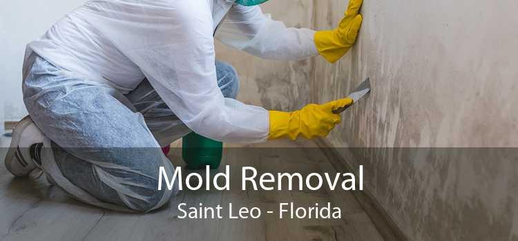 Mold Removal Saint Leo - Florida