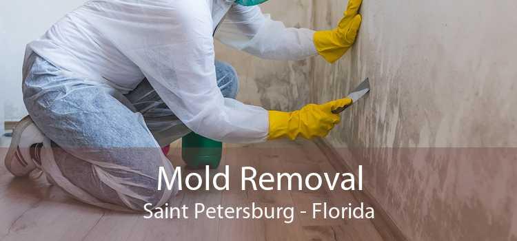 Mold Removal Saint Petersburg - Florida