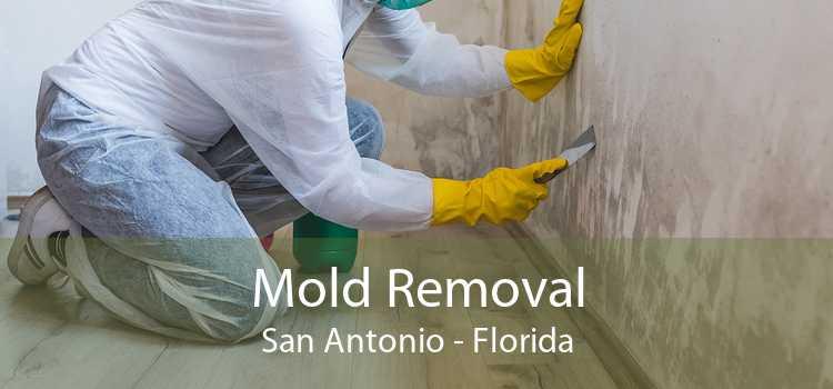 Mold Removal San Antonio - Florida