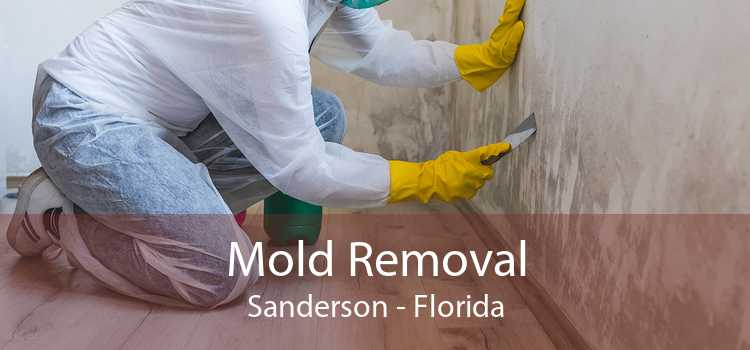 Mold Removal Sanderson - Florida