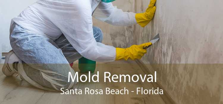 Mold Removal Santa Rosa Beach - Florida