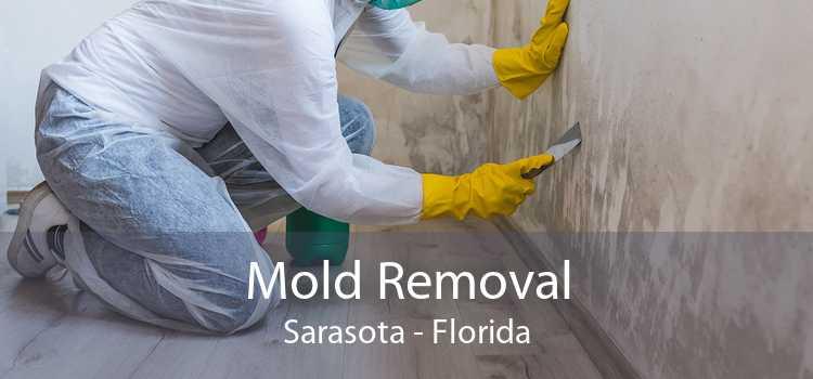 Mold Removal Sarasota - Florida