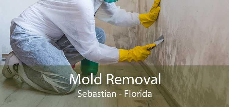 Mold Removal Sebastian - Florida