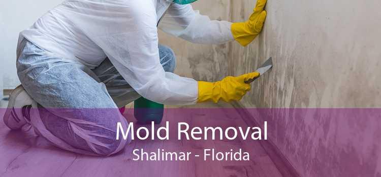 Mold Removal Shalimar - Florida