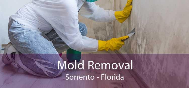 Mold Removal Sorrento - Florida