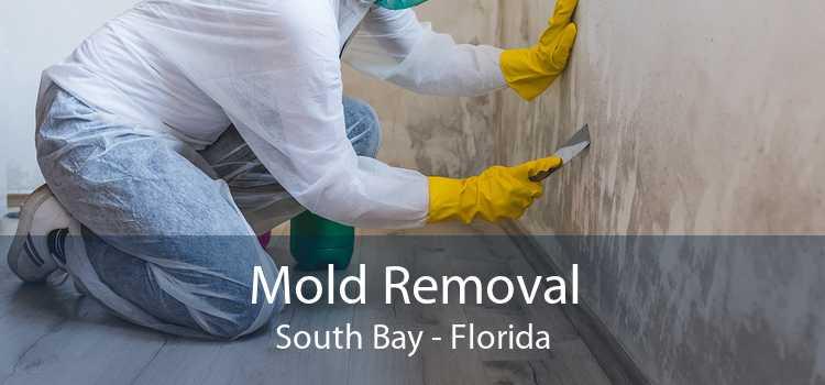 Mold Removal South Bay - Florida