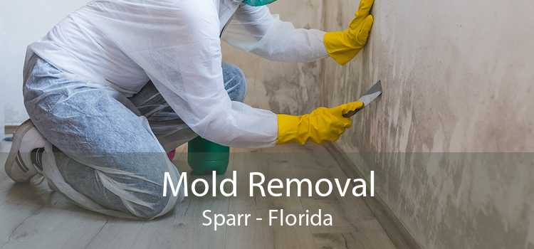 Mold Removal Sparr - Florida