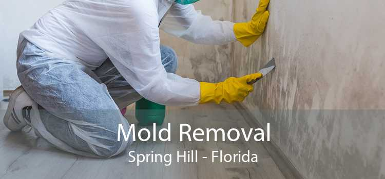 Mold Removal Spring Hill - Florida