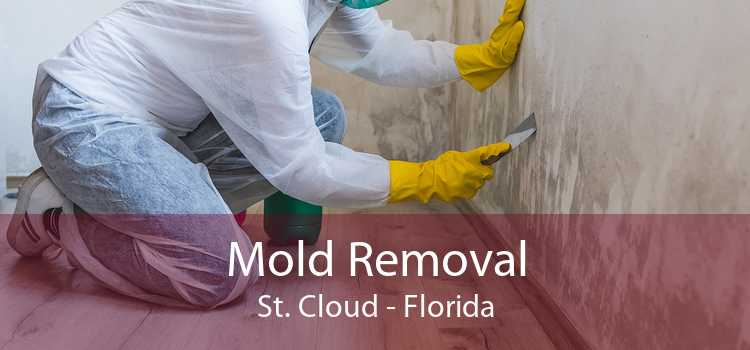 Mold Removal St. Cloud - Florida