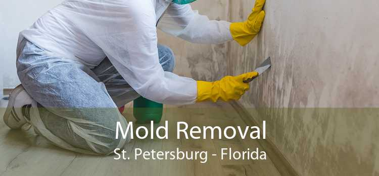Mold Removal St. Petersburg - Florida