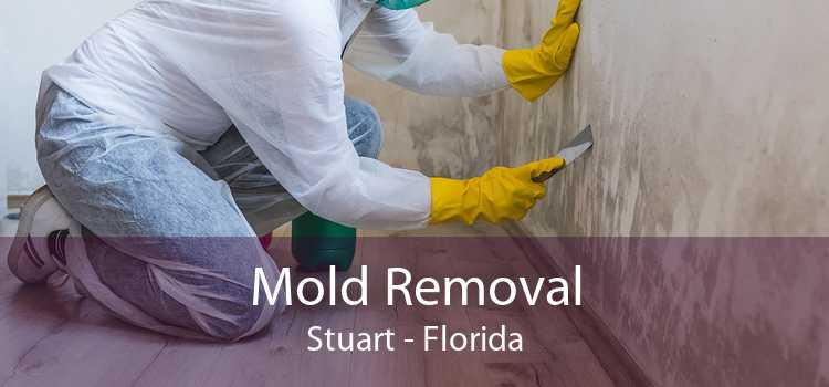 Mold Removal Stuart - Florida