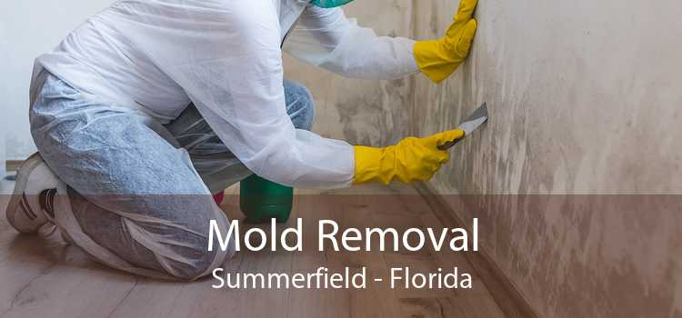 Mold Removal Summerfield - Florida