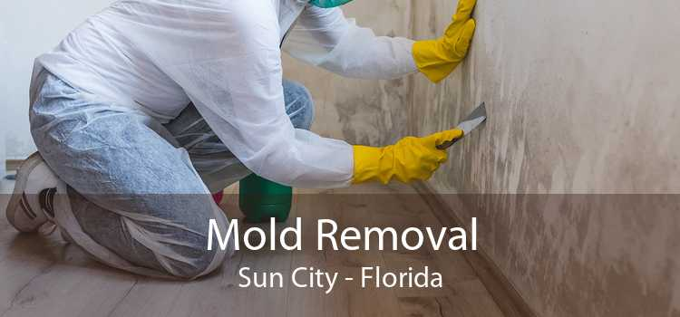 Mold Removal Sun City - Florida