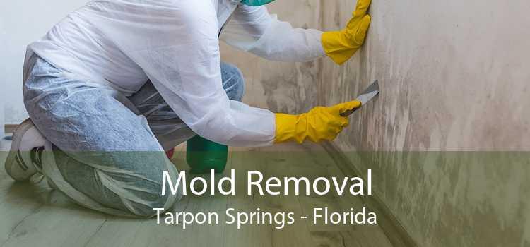 Mold Removal Tarpon Springs - Florida
