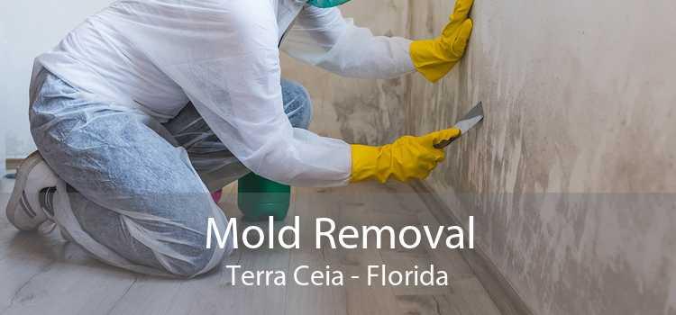 Mold Removal Terra Ceia - Florida