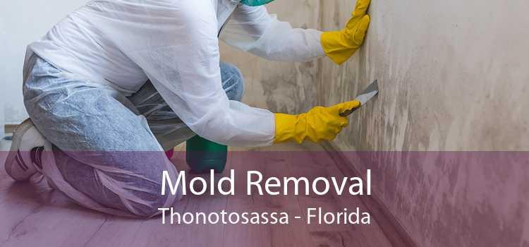 Mold Removal Thonotosassa - Florida