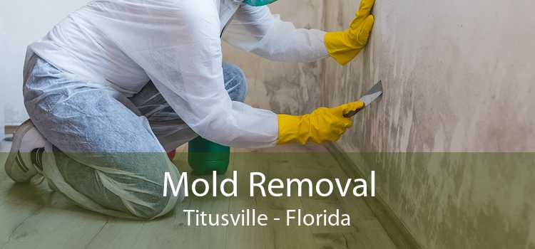 Mold Removal Titusville - Florida