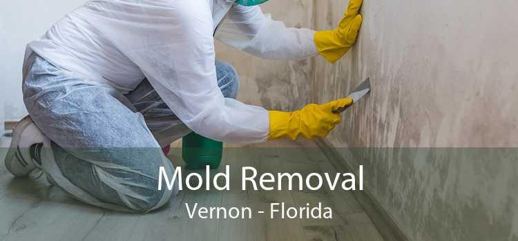 Mold Removal Vernon - Florida