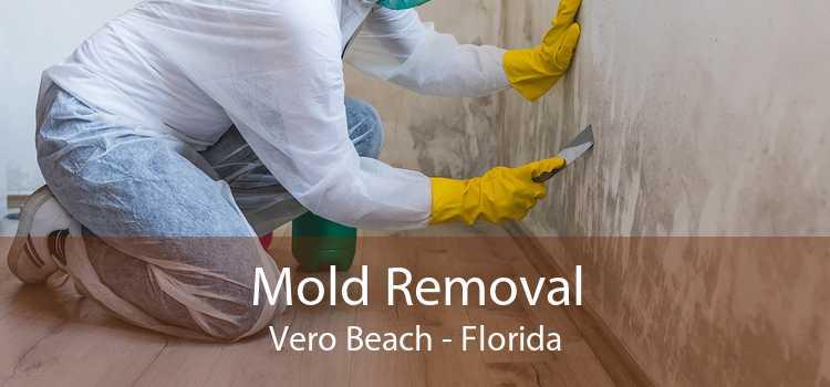 Mold Removal Vero Beach - Florida