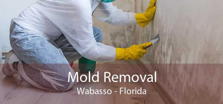 Mold Removal Wabasso - Florida