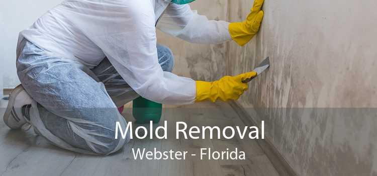 Mold Removal Webster - Florida