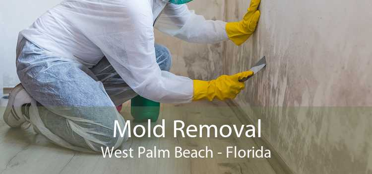 Mold Removal West Palm Beach - Florida