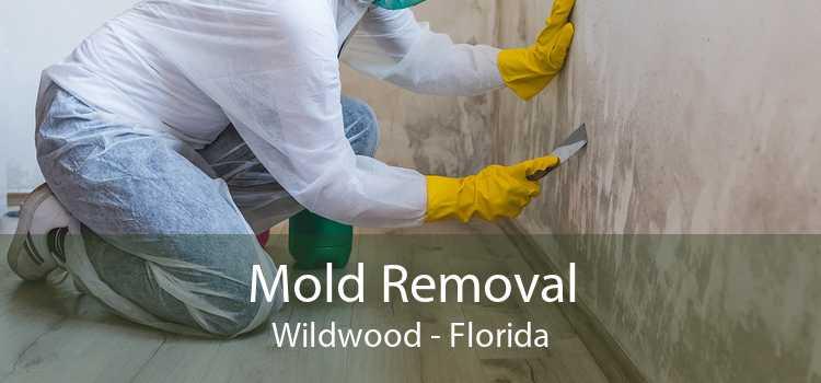 Mold Removal Wildwood - Florida