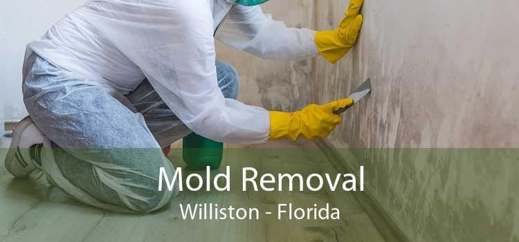 Mold Removal Williston - Florida