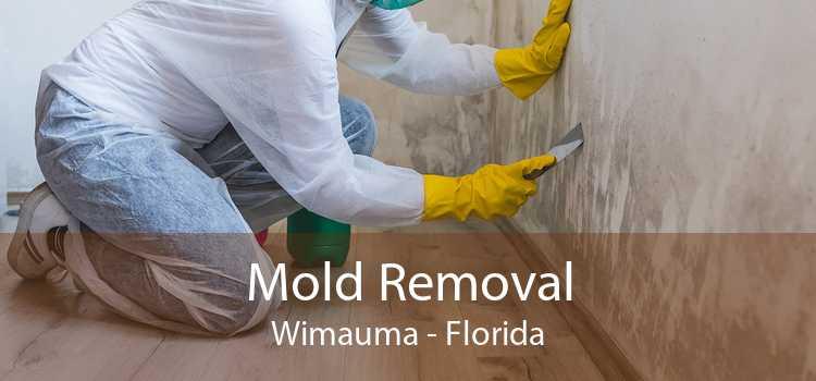 Mold Removal Wimauma - Florida