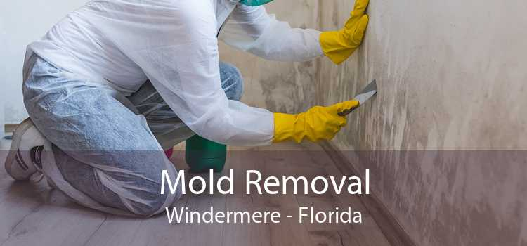 Mold Removal Windermere - Florida