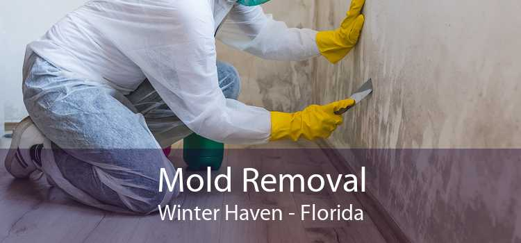 Mold Removal Winter Haven - Florida