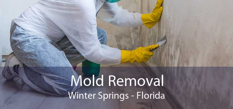 Mold Removal Winter Springs - Florida