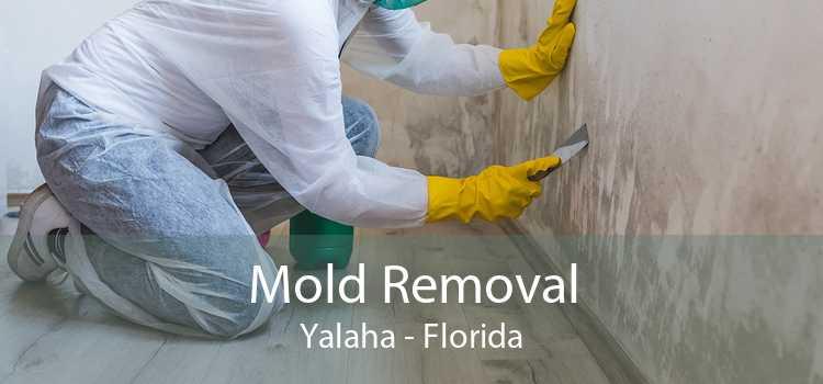 Mold Removal Yalaha - Florida