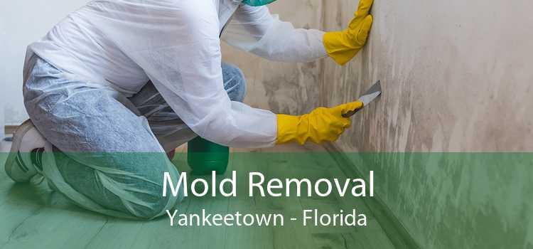 Mold Removal Yankeetown - Florida