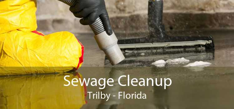 Sewage Cleanup Trilby - Florida