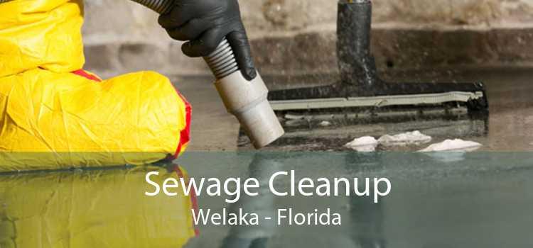 Sewage Cleanup Welaka - Florida