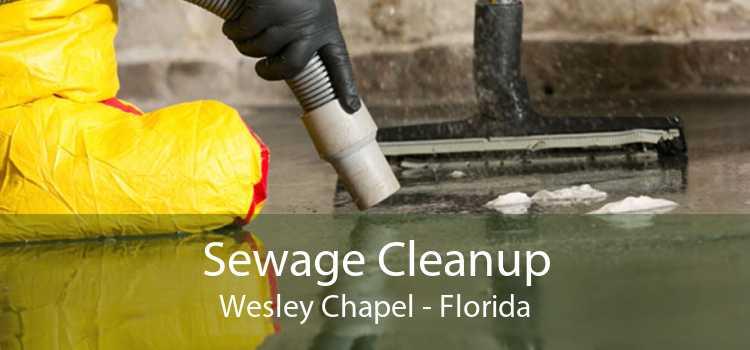 Sewage Cleanup Wesley Chapel - Florida