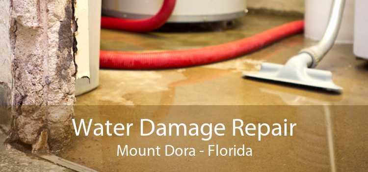Water Damage Repair Mount Dora - Florida