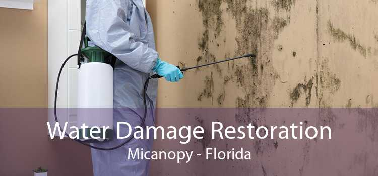 Water Damage Restoration Micanopy - Florida